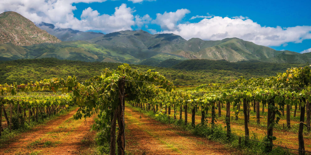 Argentine vin