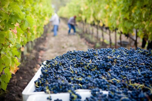 Vins bio biodynamiques naturels