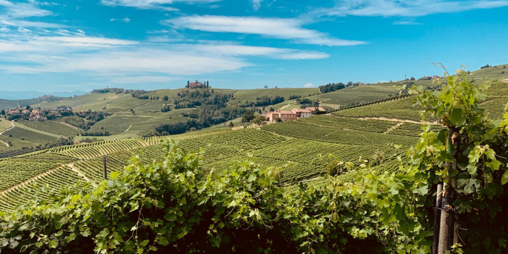 Vignobles italie